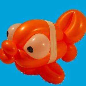 Orange balloon fish